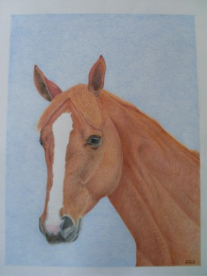 Accueil - Cheval dessin couleur ...